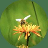 שירות - הדברת דבורים וצרעות