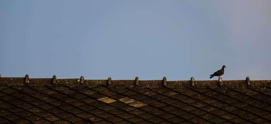 הרחקת יונים מגג רעפים