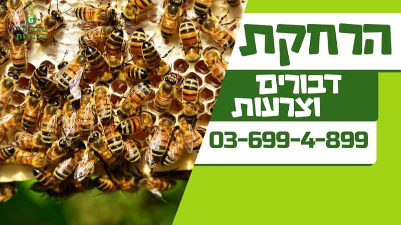 הדברת דבורים וצרעות